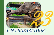 5 In 1 Safari Tour Morning Time